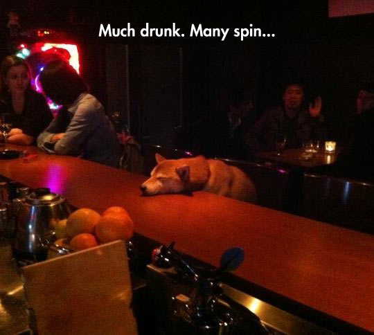 funny-doge-bar-sleeping-drunk