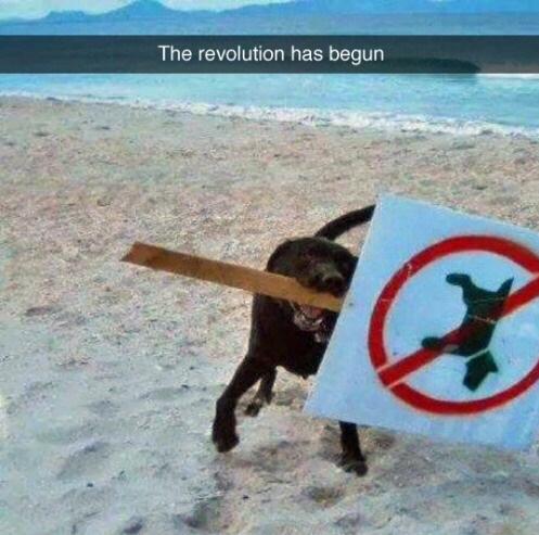 funny-dogs-revolution-sign