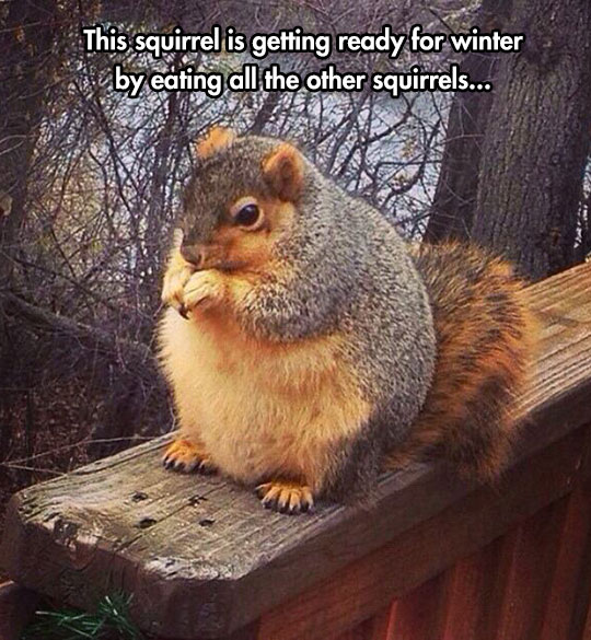 funny-fat-squirrel-forest-eating