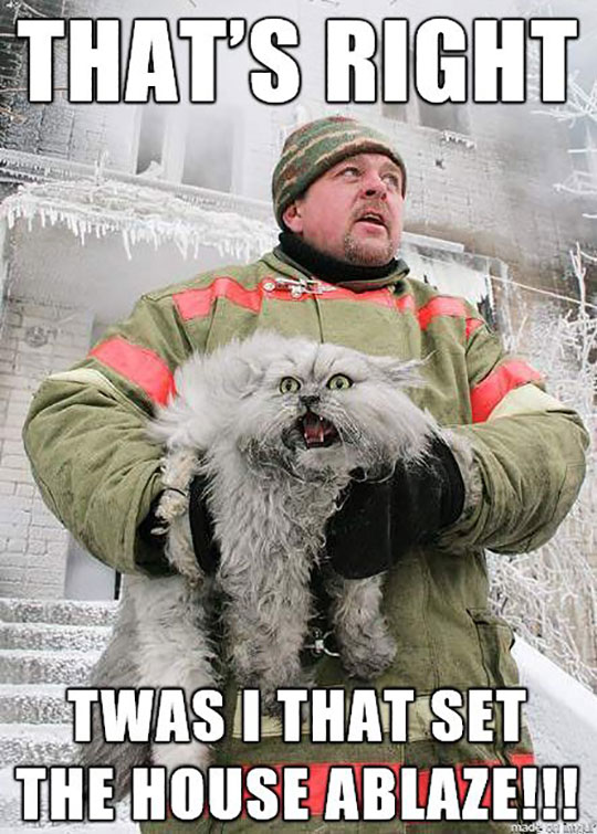 funny-firefighter-cat-rescue-screaming