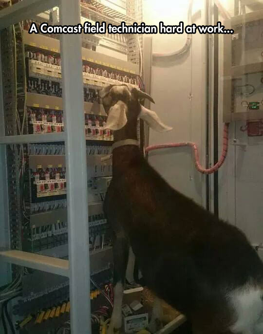 funny-goat-electric-panel-technician
