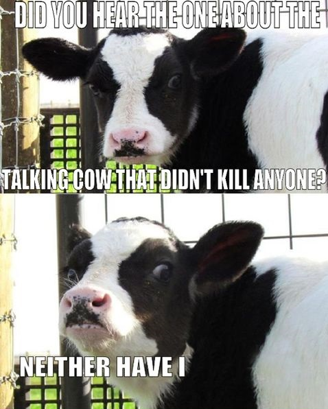 funny-killer-talking-cow