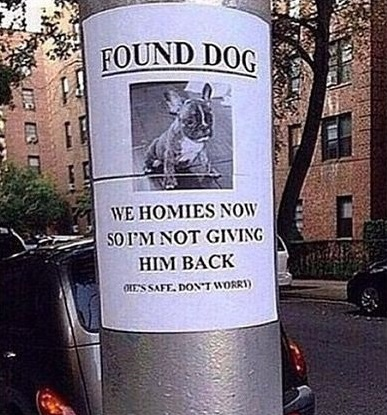 funny-lost-dog-homies