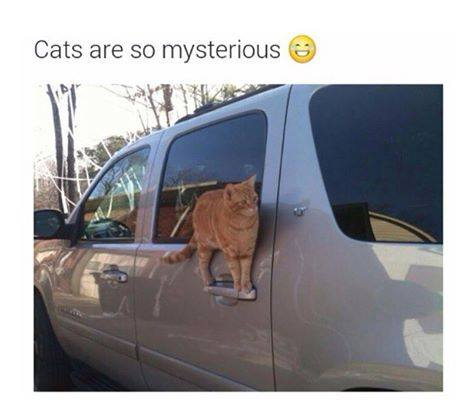 funny-mysterious-cat-car