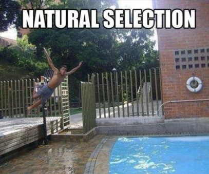 funny-natural-selection-pool