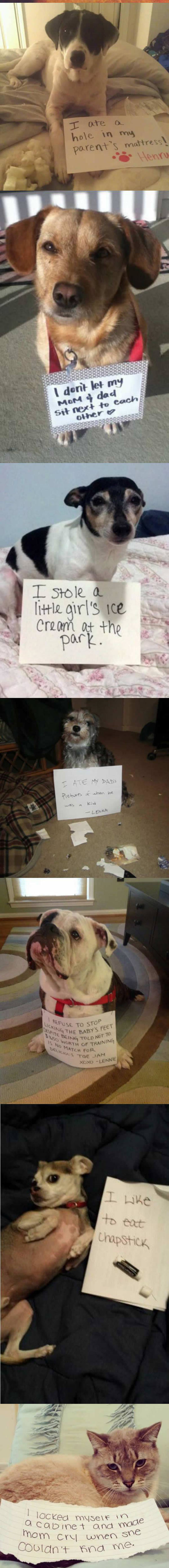 funny-note-shame-dogs-mess-confessions-cat