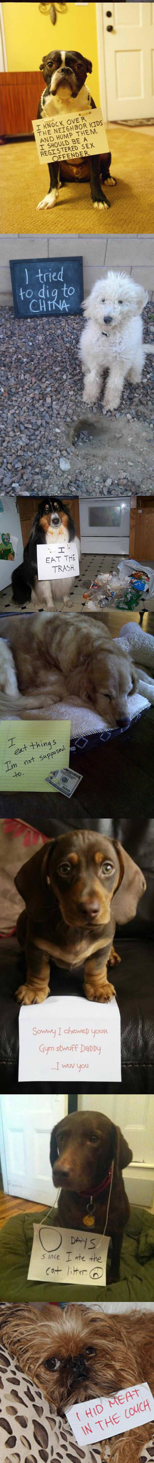 funny-note-shame-dogs-mess-confessions-couch