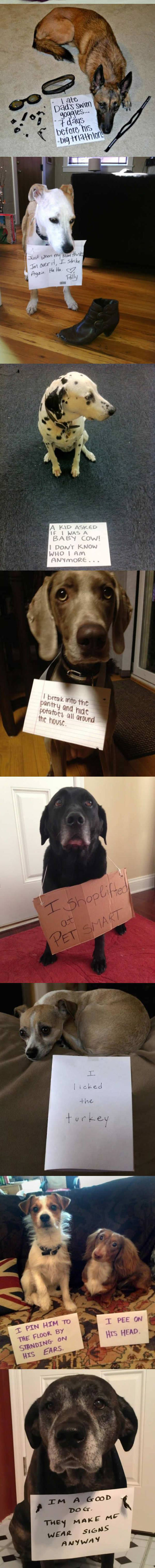 funny-note-shame-dogs-mess-confessions-shoes