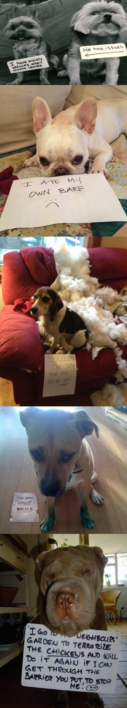 funny-note-shame-dogs-mess-confessions