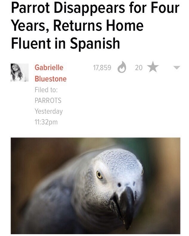 funny-parrot-spanish-language