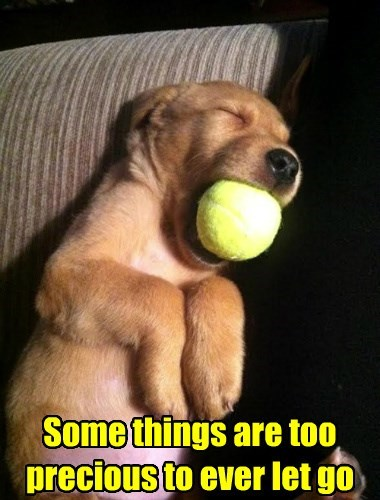funny-puppy-ball-precious