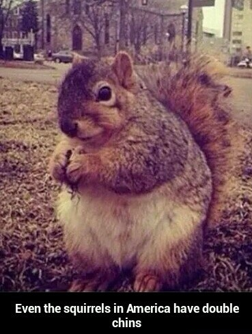 funny-squirrel-america-fat
