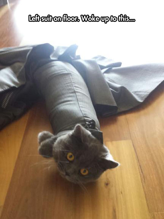 funny-suit-floor-cat-stuck
