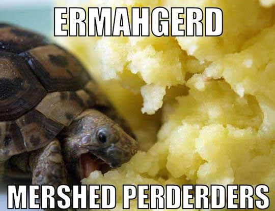 funny-turtle-eating-mashed-potatoes