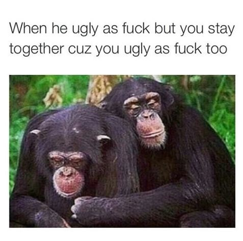 funny-ugly-couple-monkeys