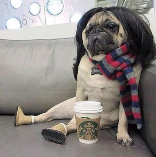 funny-white-girl-pug-starbucks