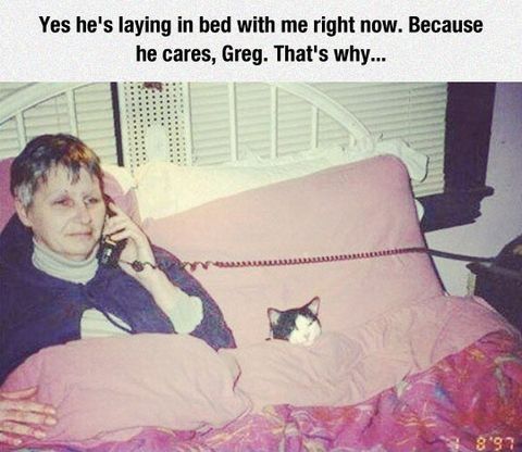 cat-bed-caring-lady
