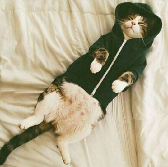 cute-cat-sleeping-hoodie-bed