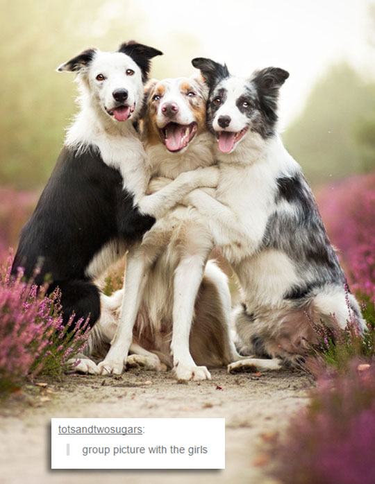 cute-dogs-picture-hug-love