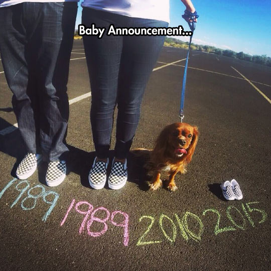 funny-baby-announcement-dog-shoes