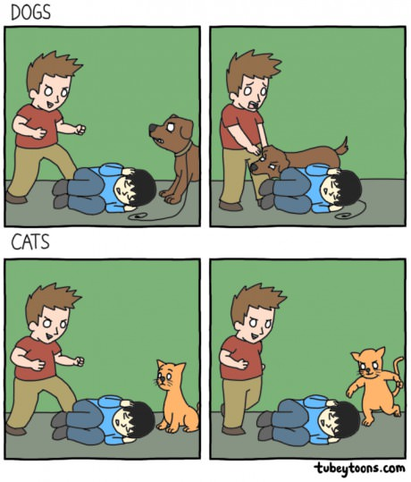 funny-coments-cats-dogs