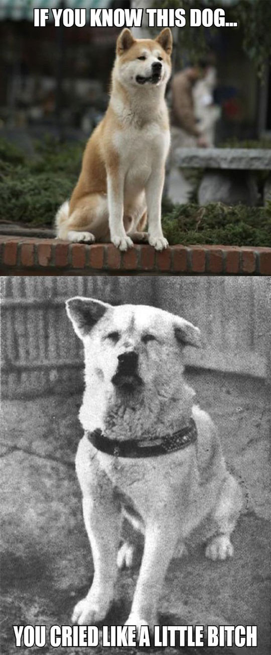 funny-dog-standing-crying-story