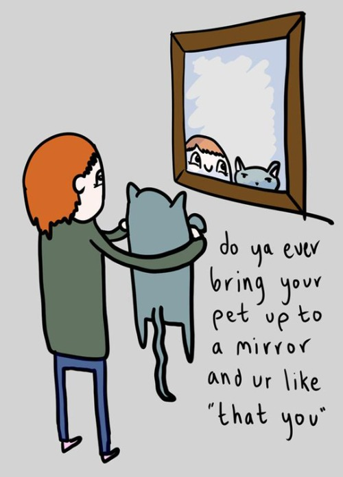 funny-pet-mirror-cat-reflection
