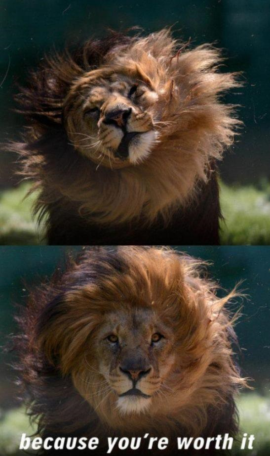 lion-loreal-hair-worth-it