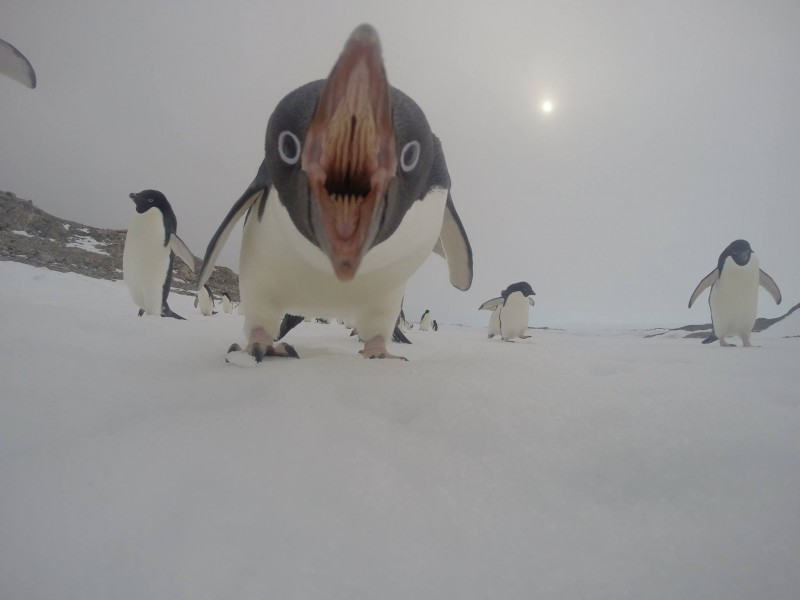 penguin-photo-mouth