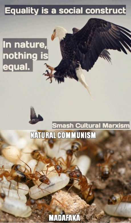ants-natural-comunism-equality