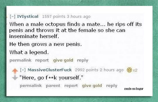 funny-octopus-mating-ritual