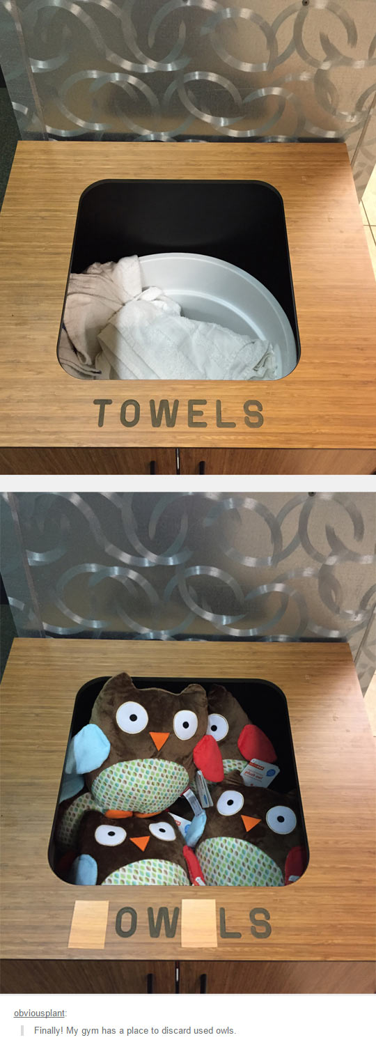 funny-towels-place-gym-owls
