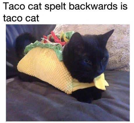 taco-cat-backwords