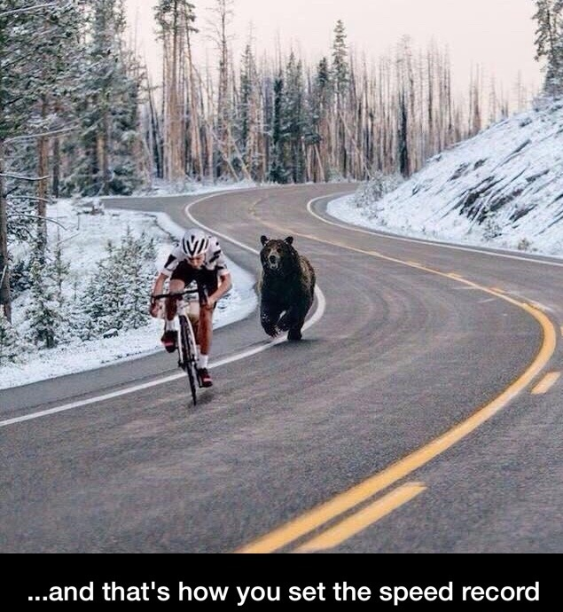 bear-bicycle-speed-record