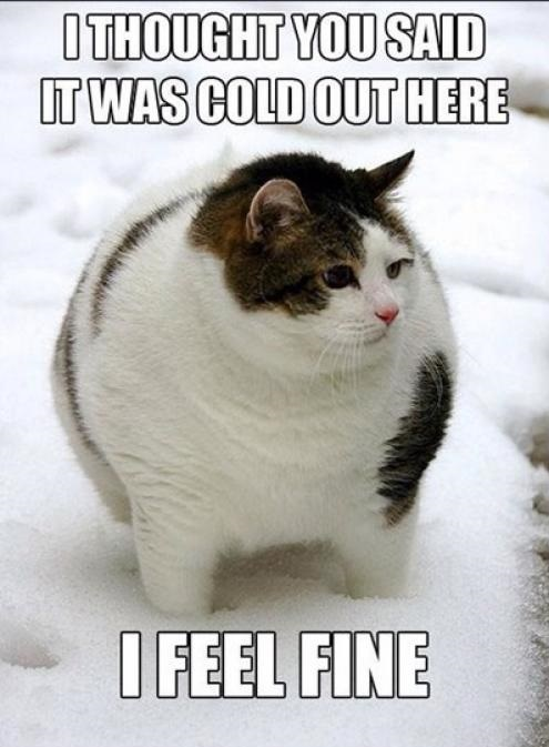 cat-cold-snow-fat