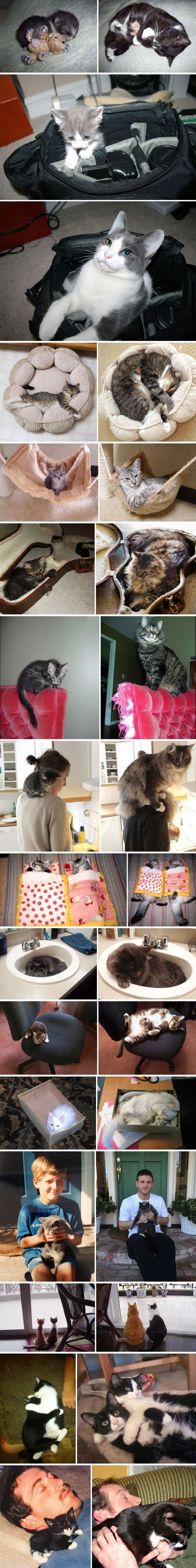cats-before-after-growing-up