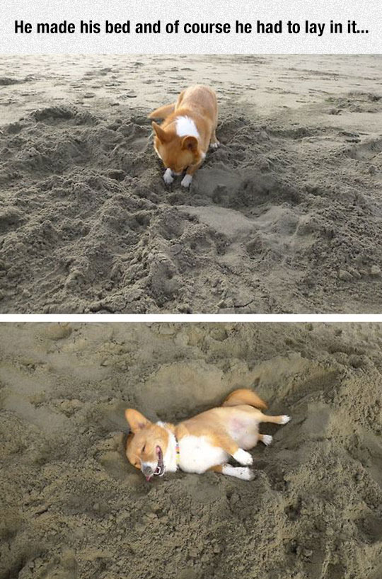 cute-puppy-laying-sand-beach
