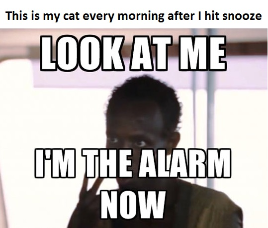 funny-alarm-snooze-cat-Captain-Phillips