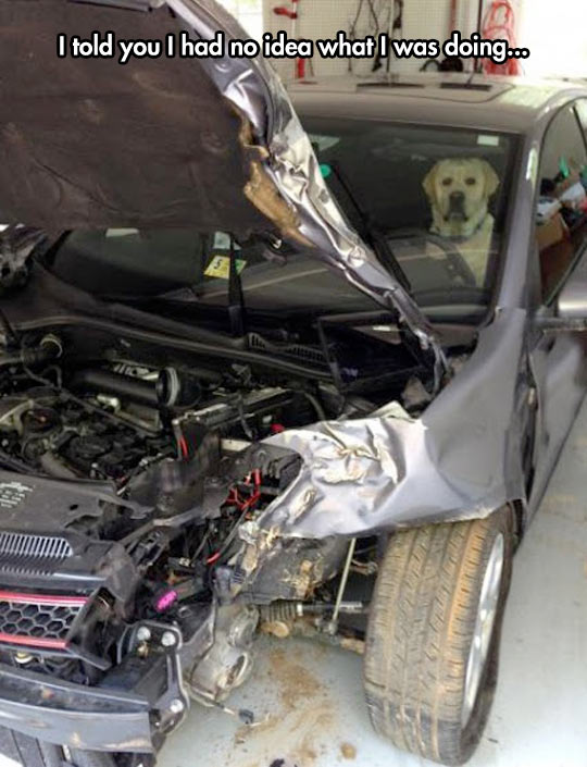 funny-car-dog-driving-crash-destroyed-engine