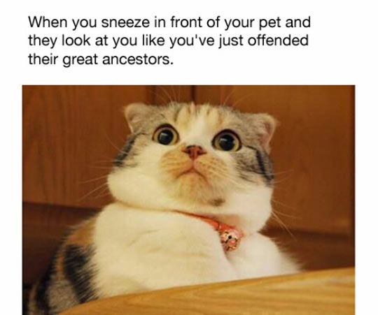 Out-of-Body Experience Funny-cat-sneeze-pet-expression