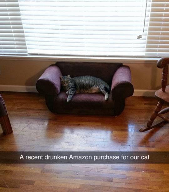 funny-couch-cat-Amazon-drunk