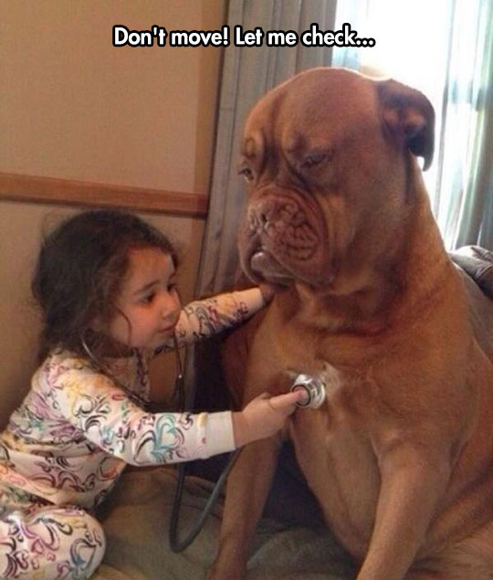 funny-girl-dog-health-checking