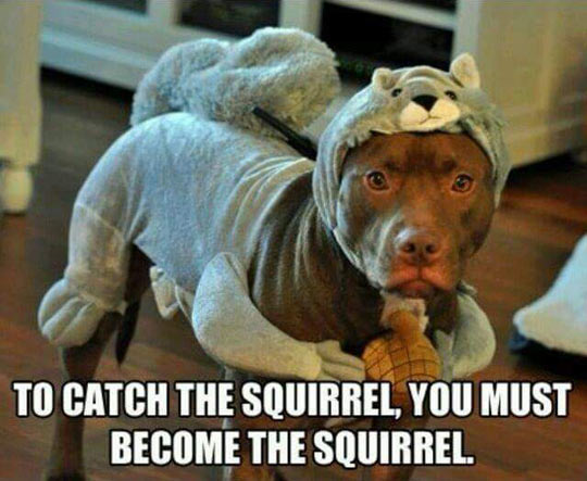funny-squirrel-dog-disguised-hat
