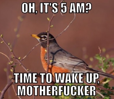 bird-sing-morning-annoying