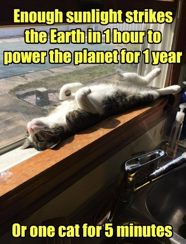 cat-light-sun-power-planet