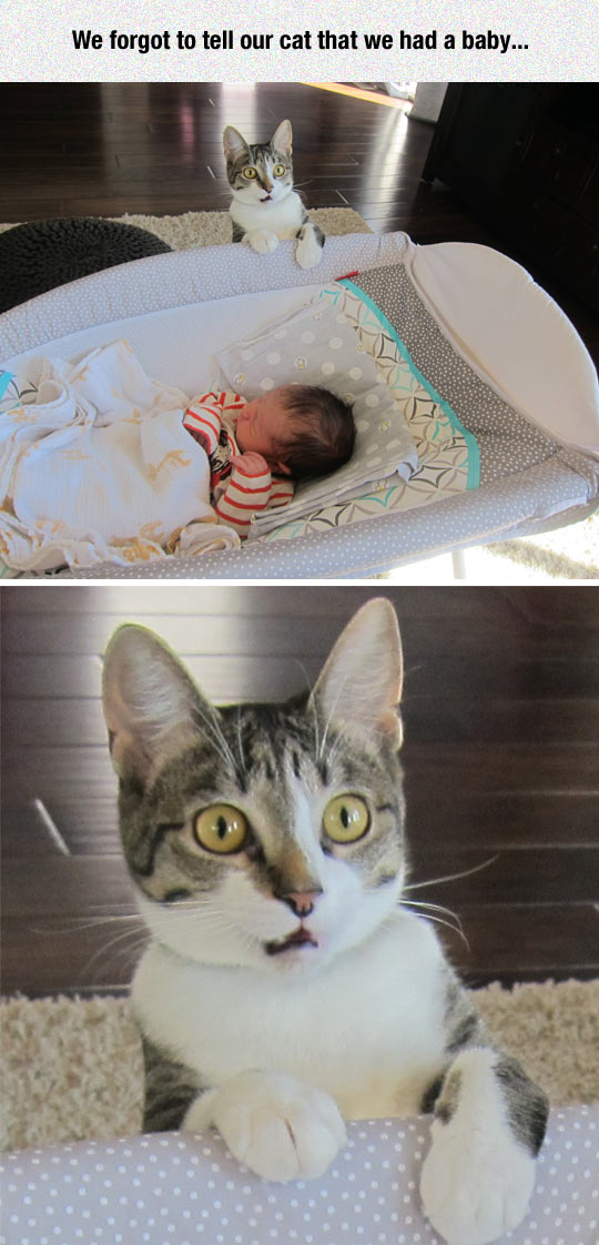 funny-baby-surprised-cat-face