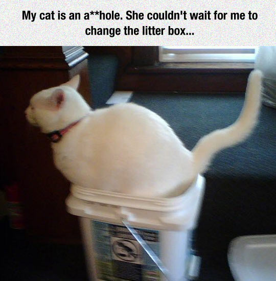 funny-cat-bucket-litter-box