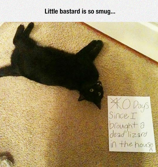 funny-cat-sign-dead-lizard