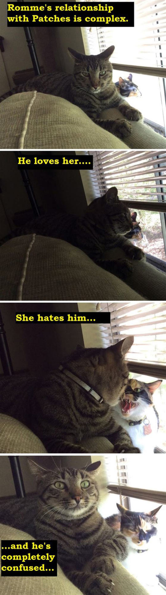 funny-cats-confusing-relationship-love