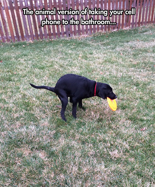 funny dog pooping backyard Frisbee like a human